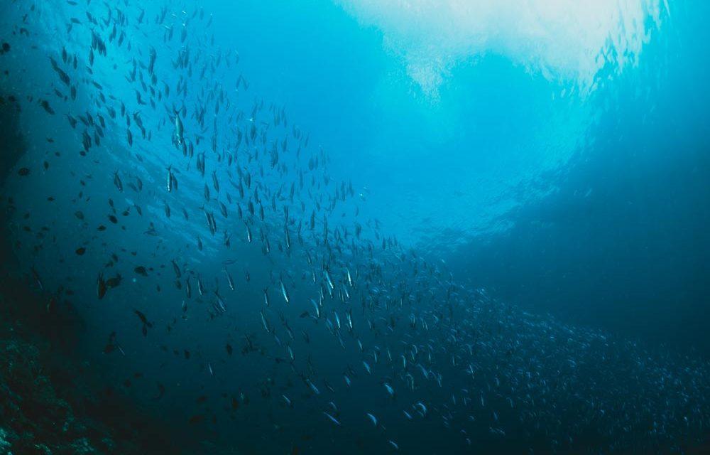 3 – Sauvegarder les océans et préserver leurs ressources