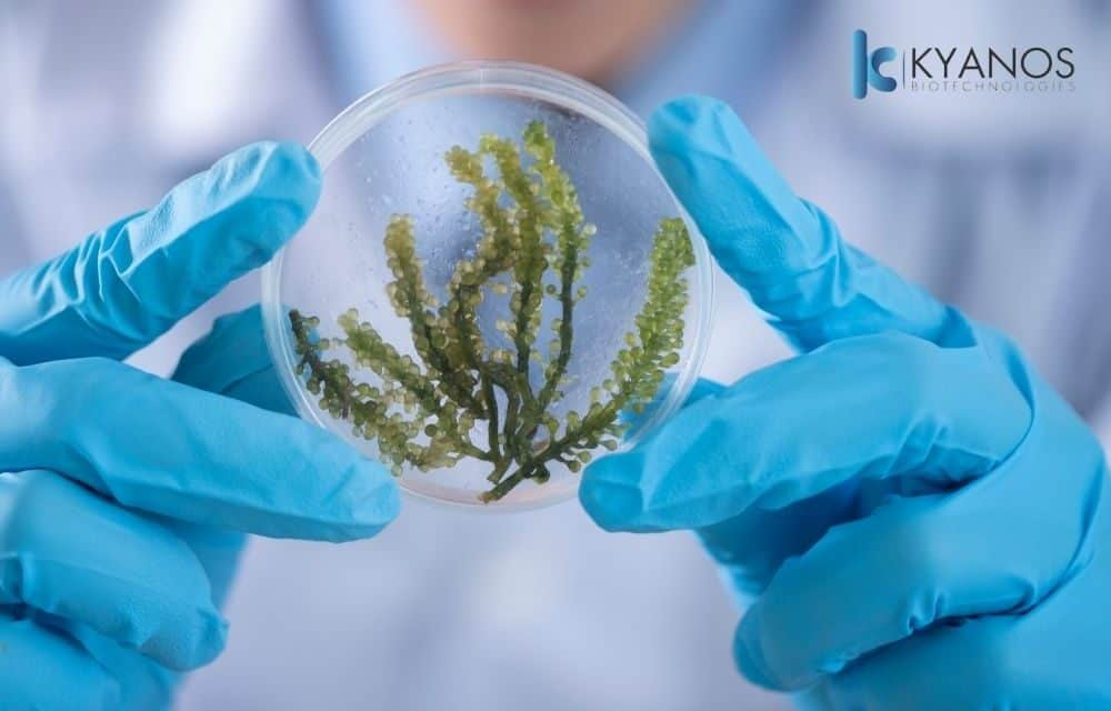 MICROALGAE TO SAVE THE PLANET