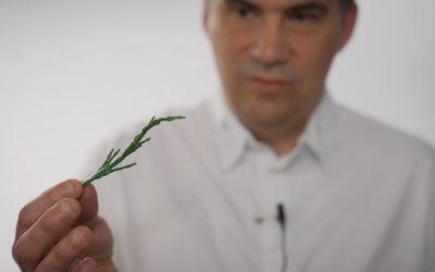 Bien choisir ses salicornes avec Gaël Orieux