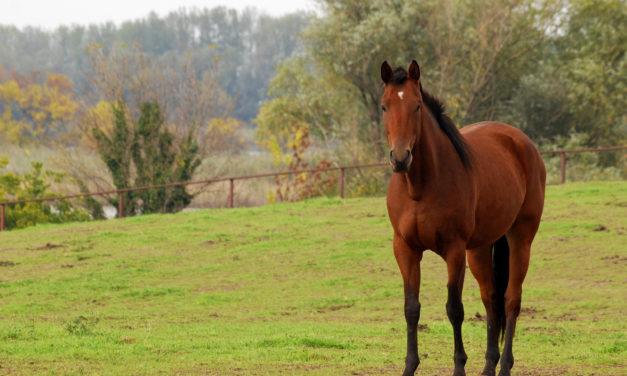 Les chevaux, nos alliés santé