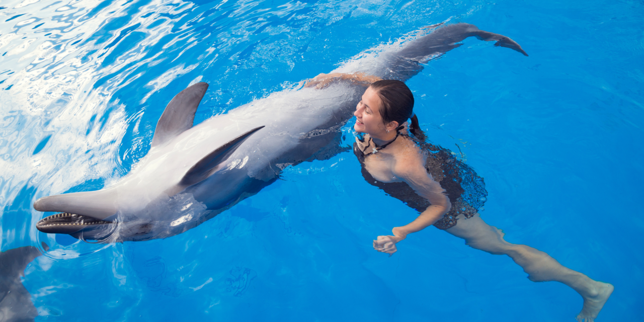 Dolphin Assisted Therapy