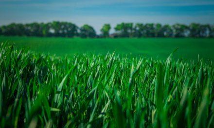 L'irrigation régulée par les plantes !