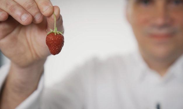 Bien choisir ses fraises avec Gäel Orieux