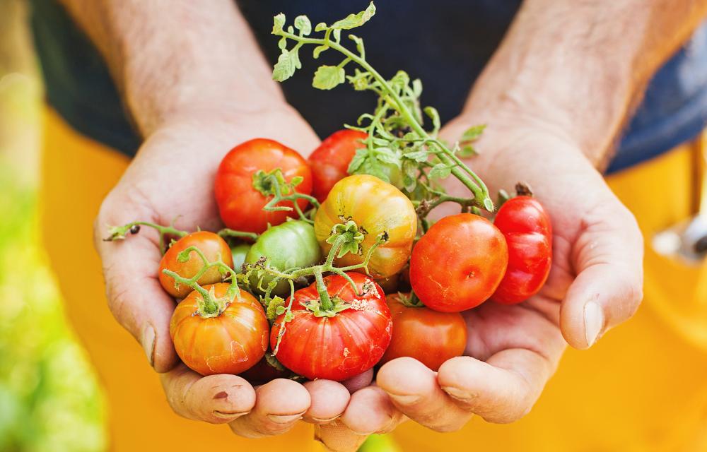 Bien choisir ses tomates avec Guy Krenzer